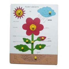 Plant Of Growth Puzzle for Learning Kids (Pack Of 1)